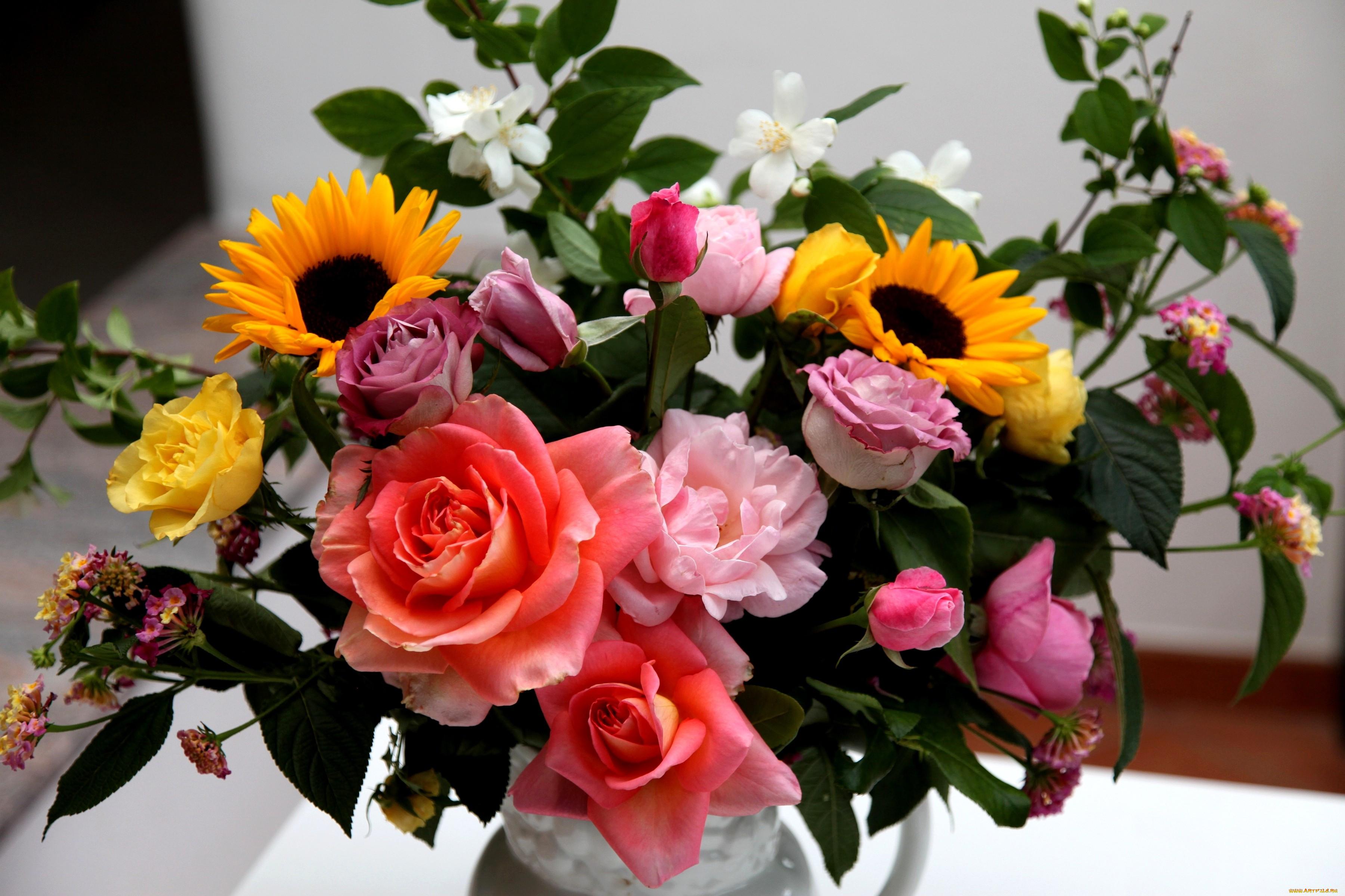Картинки с цветами вьюн казани